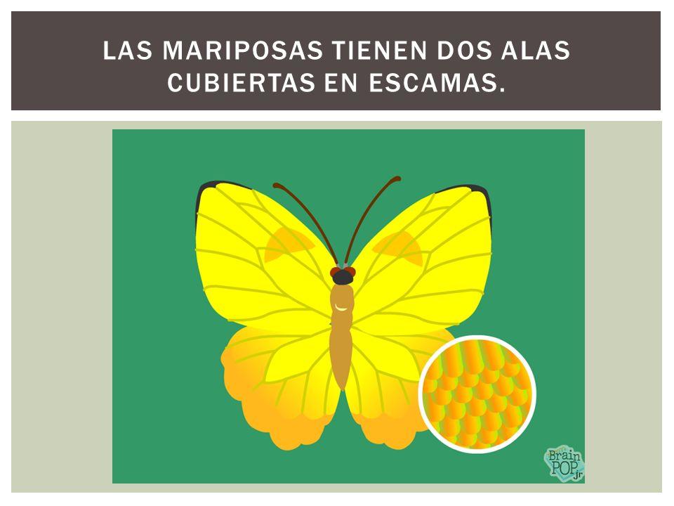 Las mariposas tienen dos alas cubiertas en escamas.