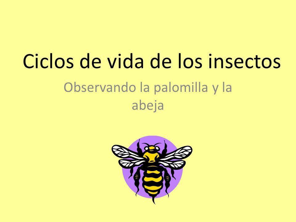 Ciclos de vida de los insectos