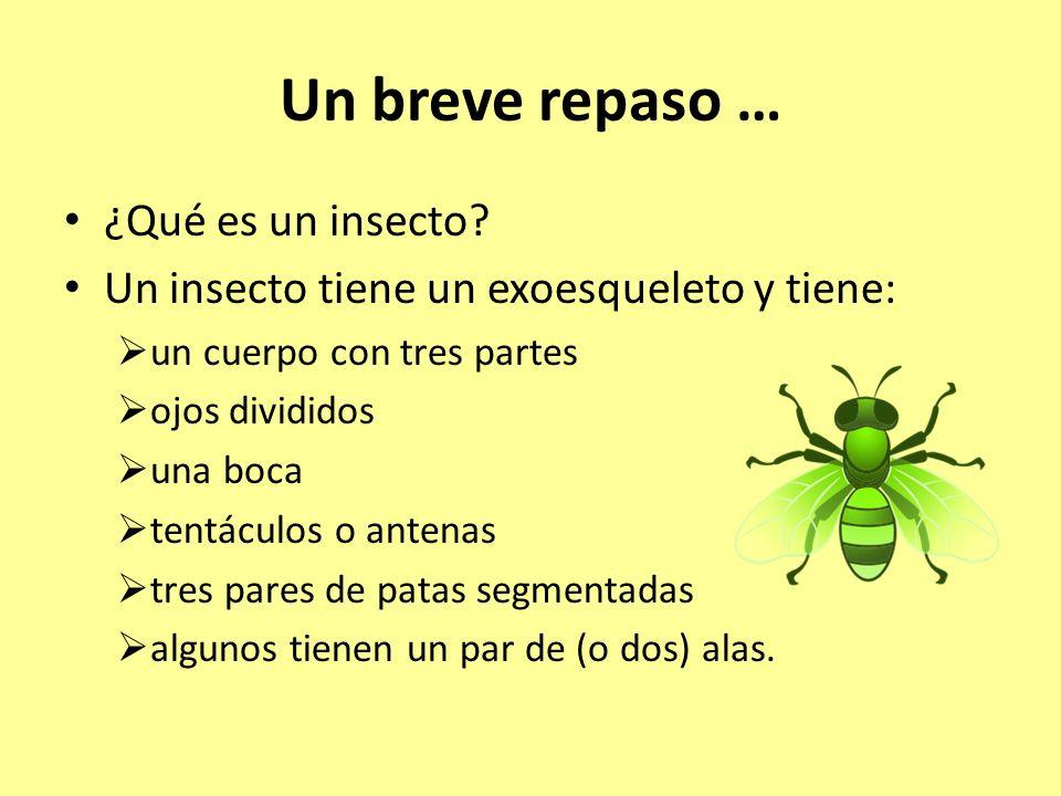 Un breve repaso … ¿Qué es un insecto