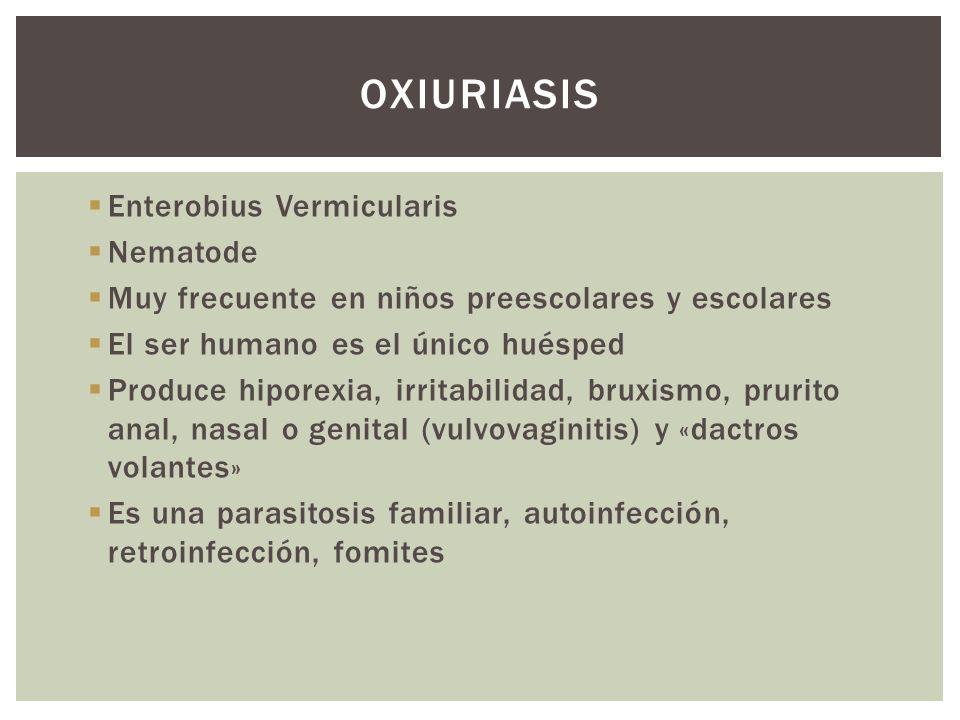 oxiuriasis Enterobius Vermicularis Nematode