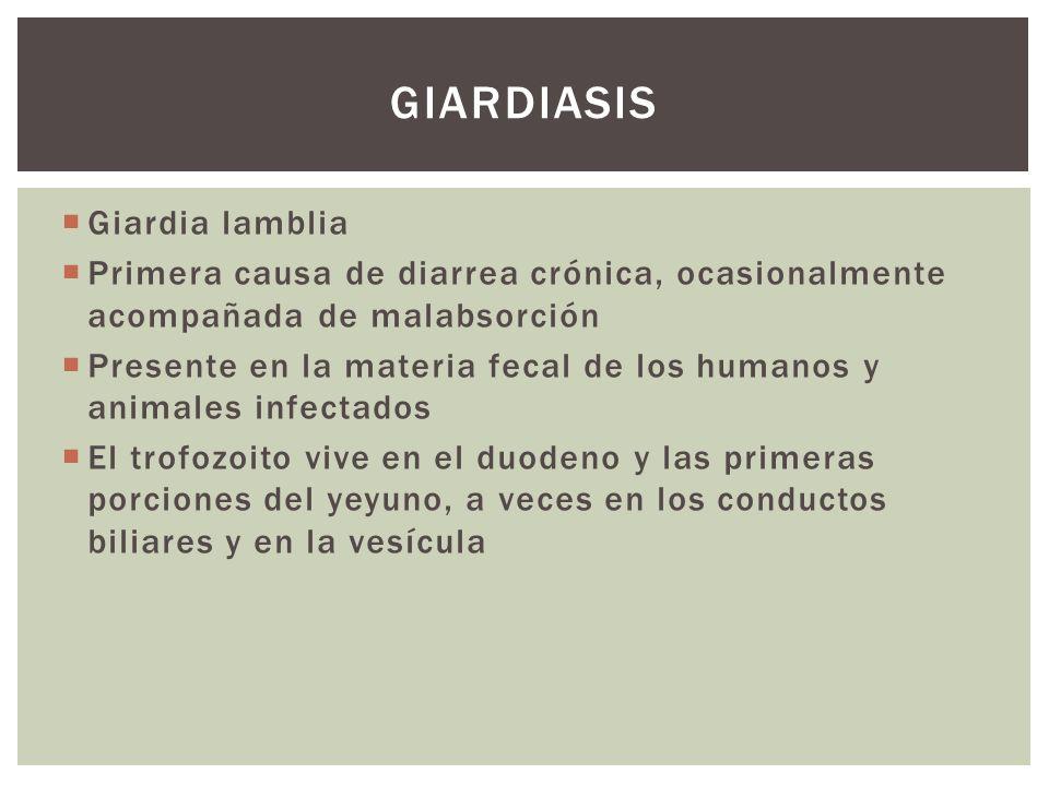 Giardiasis Giardia lamblia