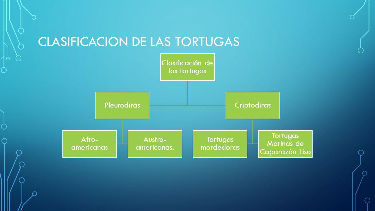 CLASIFICACION DE LAS TORTUGAS