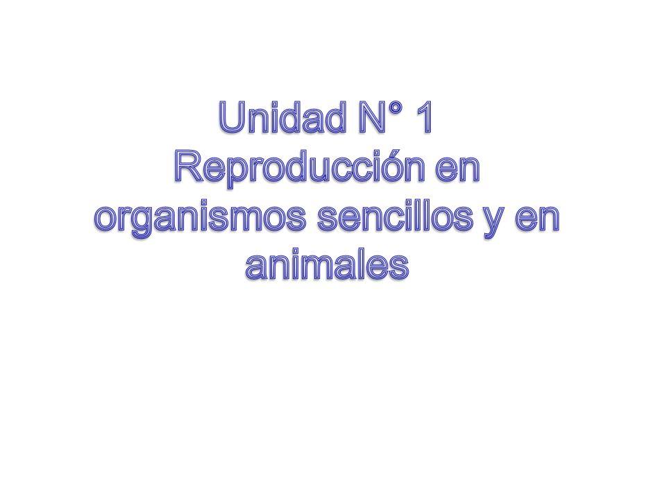 Unidad N° 1 Reproducción en organismos sencillos y en animales