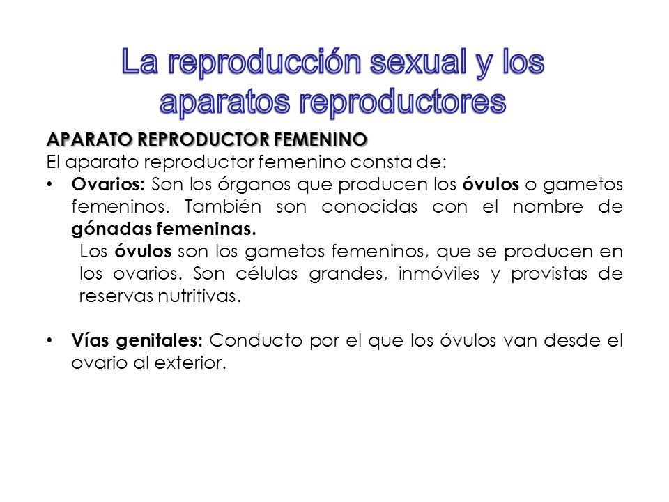 La reproducción sexual y los aparatos reproductores