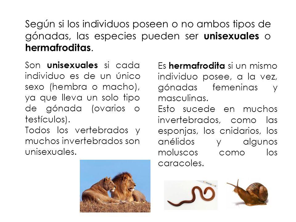 Según si los individuos poseen o no ambos tipos de gónadas, las especies pueden ser unisexuales o hermafroditas.