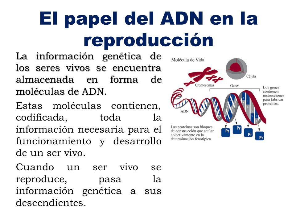 El papel del ADN en la reproducción
