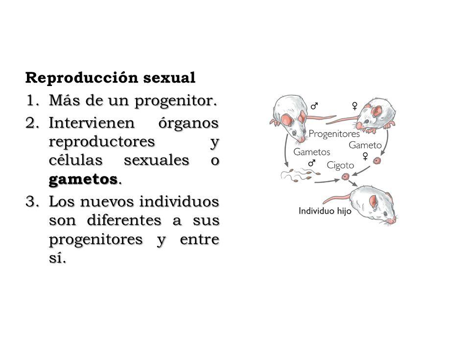 Reproducción sexual Más de un progenitor. Intervienen órganos reproductores y células sexuales o gametos.