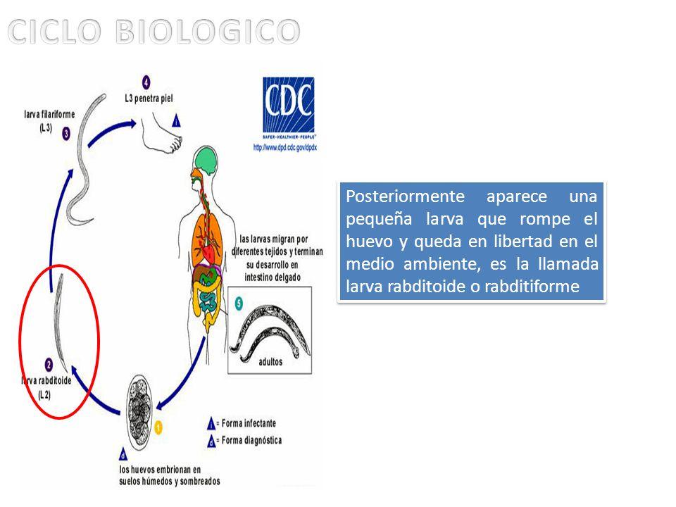 CICLO BIOLOGICO