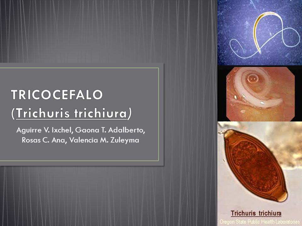 TRICOCEFALO (Trichuris trichiura)