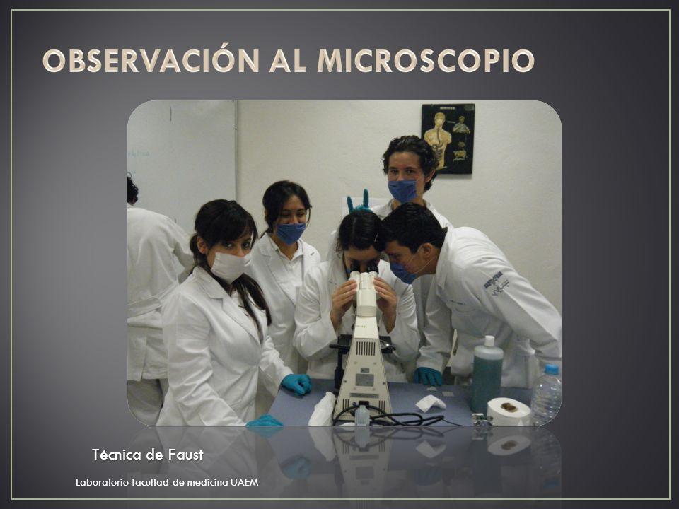 OBSERVACIÓN AL MICROSCOPIO