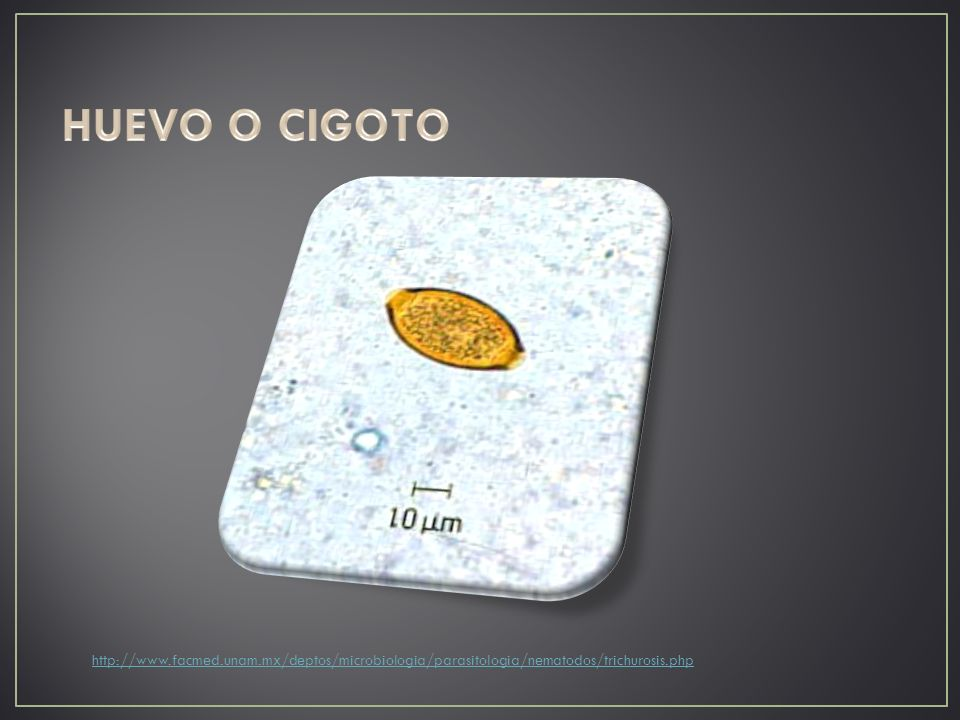 HUEVO O CIGOTO http://www.facmed.unam.mx/deptos/microbiologia/parasitologia/nematodos/trichurosis.php.