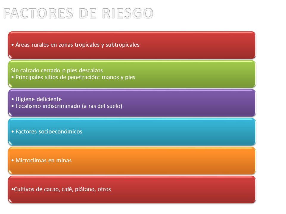 FACTORES DE RIESGO • Áreas rurales en zonas tropicales y subtropicales