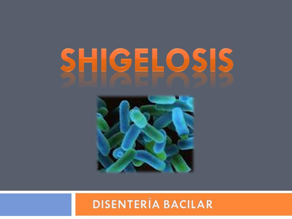 SHIGELOSIS DISENTERÍA BACILAR