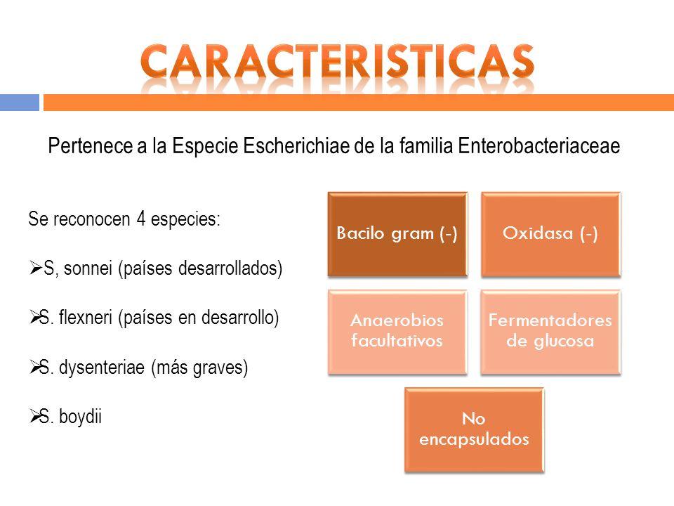 CARACTERISTICAS Pertenece a la Especie Escherichiae de la familia Enterobacteriaceae. Bacilo gram (-)