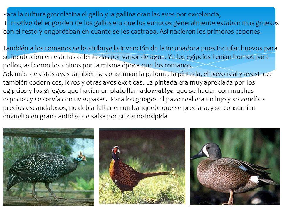 Para la cultura grecolatina el gallo y la gallina eran las aves por excelencia,