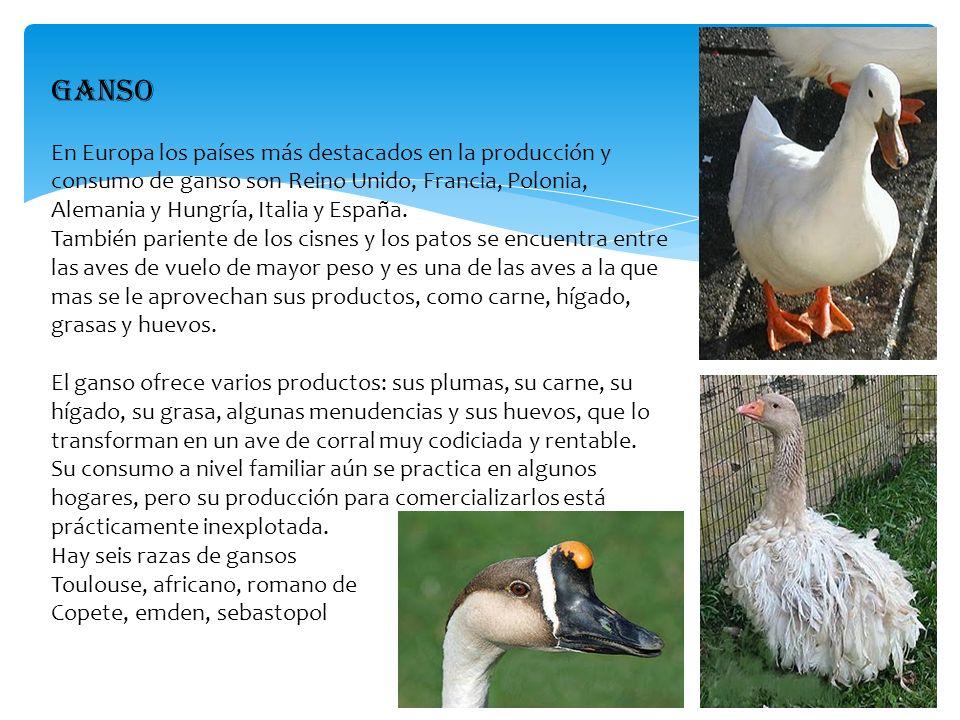 GANSO En Europa los países más destacados en la producción y consumo de ganso son Reino Unido, Francia, Polonia, Alemania y Hungría, Italia y España.