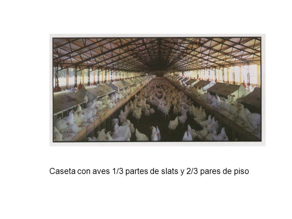 Caseta con aves 1/3 partes de slats y 2/3 pares de piso
