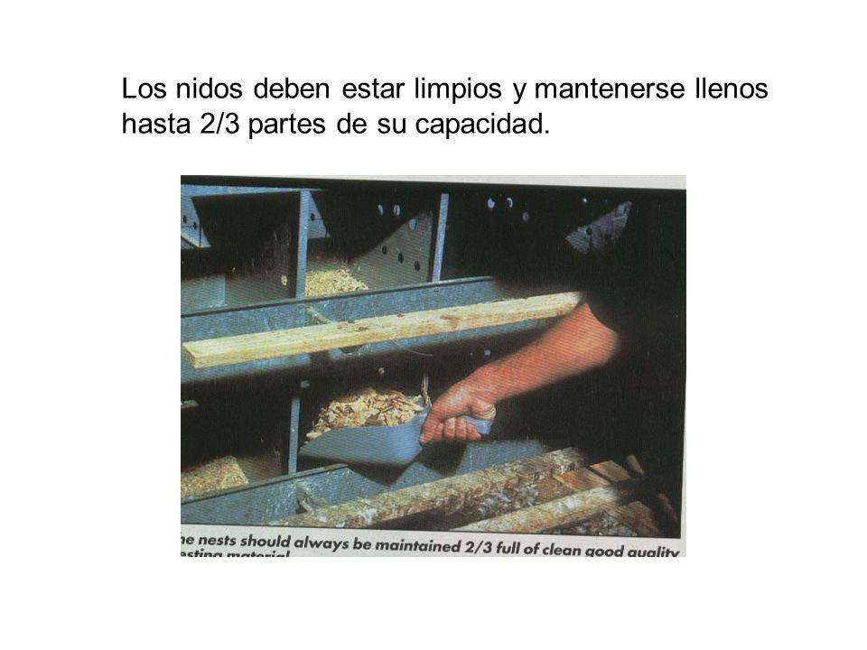 Los nidos deben estar limpios y mantenerse llenos hasta 2/3 partes de su capacidad.