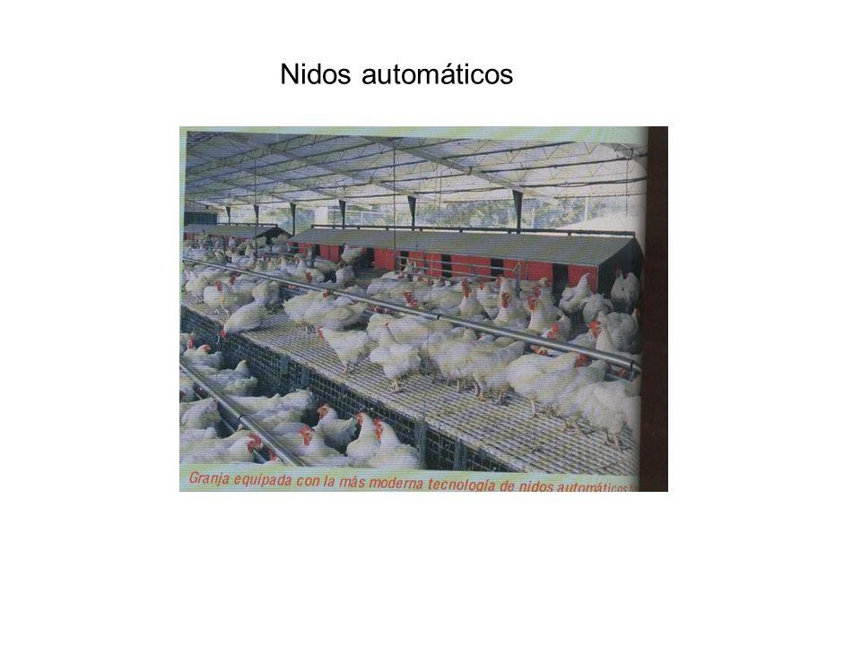 Nidos automáticos