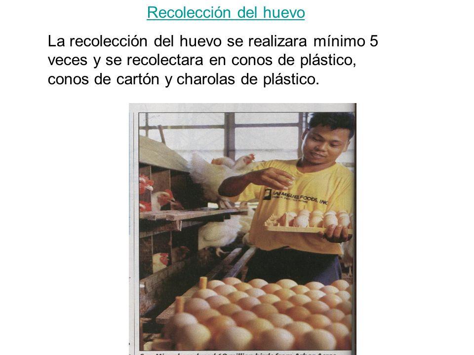 Recolección del huevo