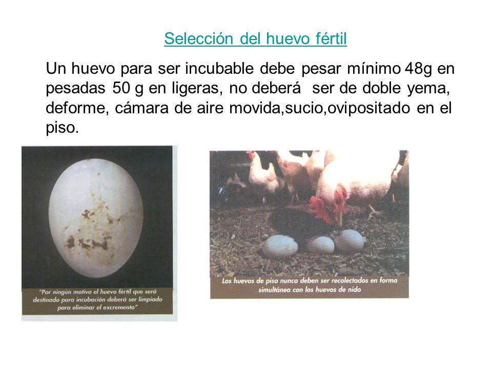 Selección del huevo fértil