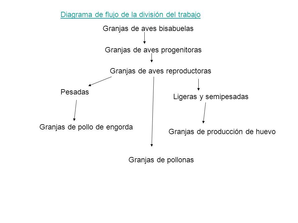Diagrama de flujo de la división del trabajo