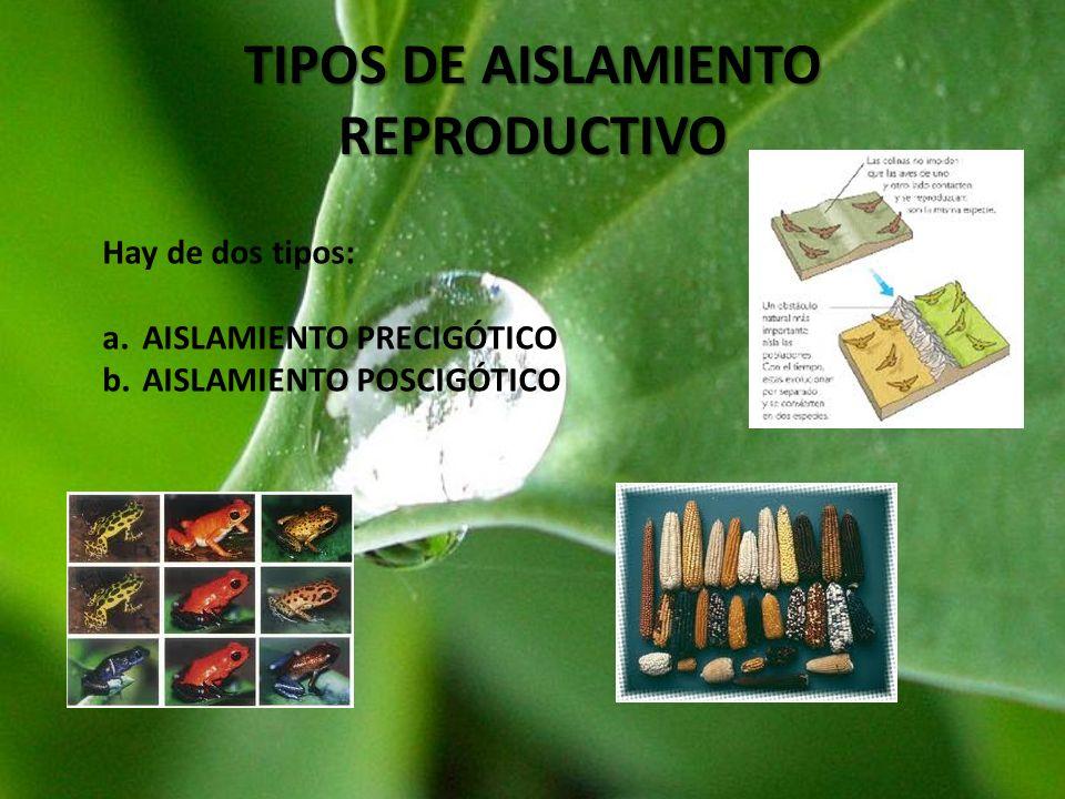 TIPOS DE AISLAMIENTO REPRODUCTIVO