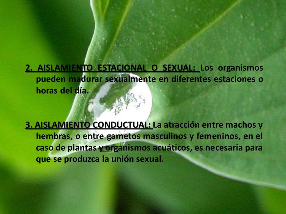 2. AISLAMIENTO ESTACIONAL O SEXUAL: Los organismos pueden madurar sexualmente en diferentes estaciones o horas del día.
