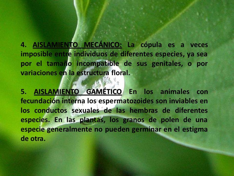 4. AISLAMIENTO MECÁNICO: La cópula es a veces imposible entre individuos de diferentes especies, ya sea por el tamaño incompatible de sus genitales, o por variaciones en la estructura floral.