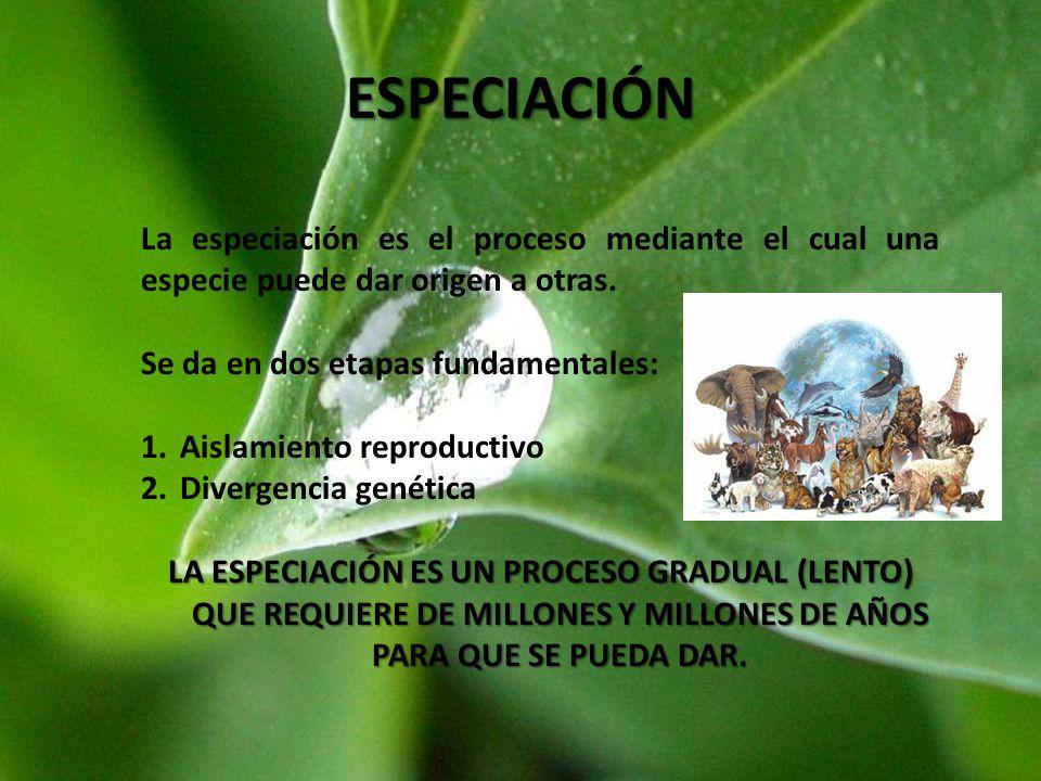 ESPECIACIÓN La especiación es el proceso mediante el cual una especie puede dar origen a otras. Se da en dos etapas fundamentales: