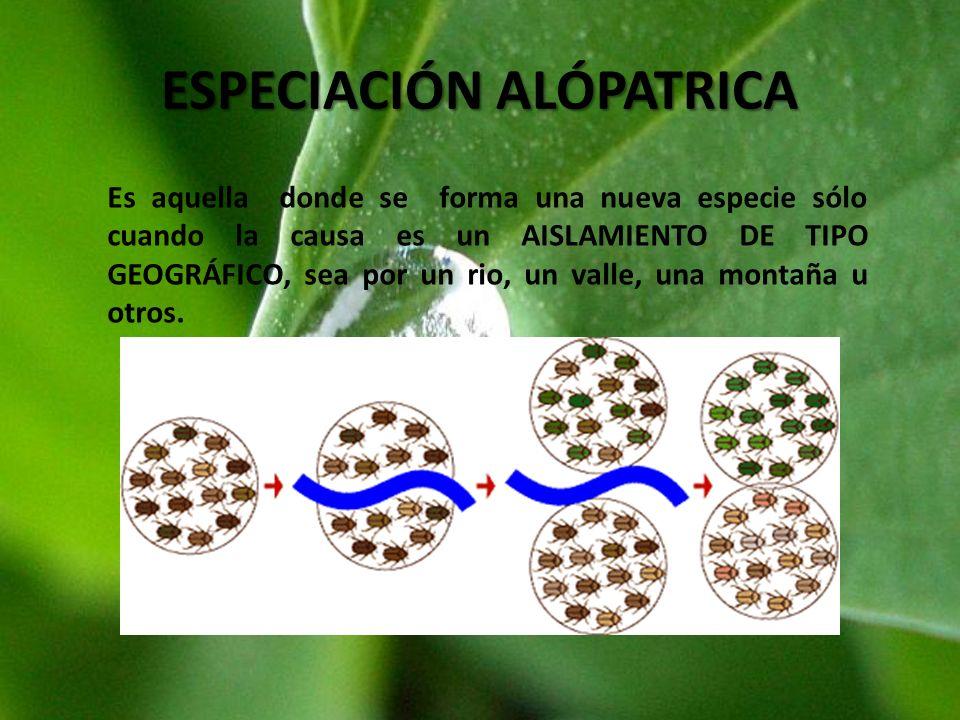 ESPECIACIÓN ALÓPATRICA
