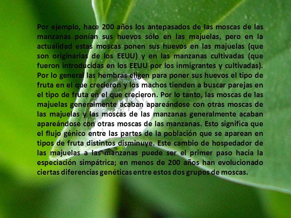 Por ejemplo, hace 200 años los antepasados de las moscas de las manzanas ponían sus huevos sólo en las majuelas, pero en la actualidad estas moscas ponen sus huevos en las majuelas (que son originarias de los EEUU) y en las manzanas cultivadas (que fueron introducidas en los EEUU por los inmigrantes y cultivadas).