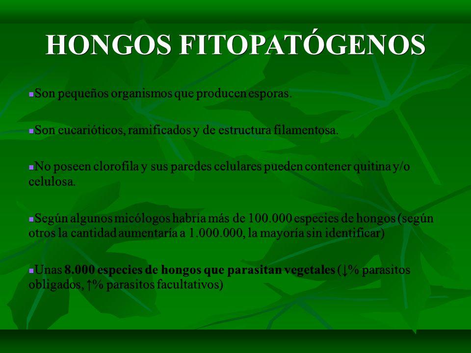 HONGOS FITOPATÓGENOS Son pequeños organismos que producen esporas.