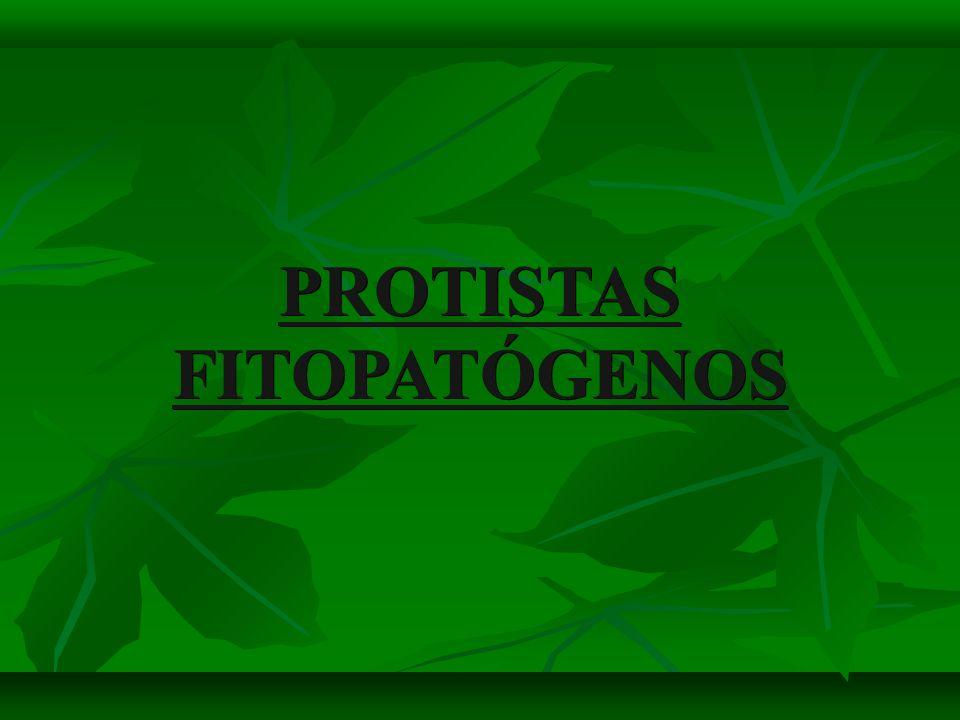 PROTISTAS FITOPATÓGENOS