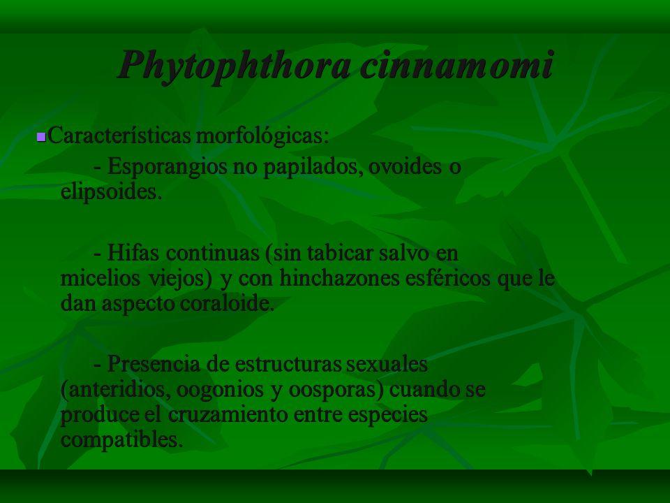 Phytophthora cinnamomi