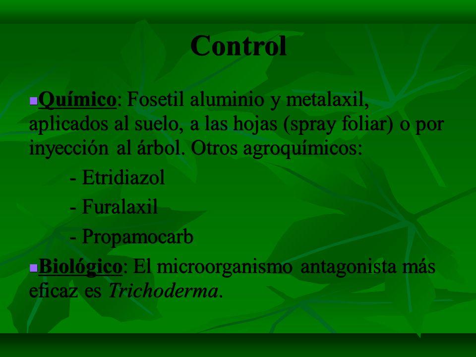 Control Químico: Fosetil aluminio y metalaxil, aplicados al suelo, a las hojas (spray foliar) o por inyección al árbol. Otros agroquímicos: