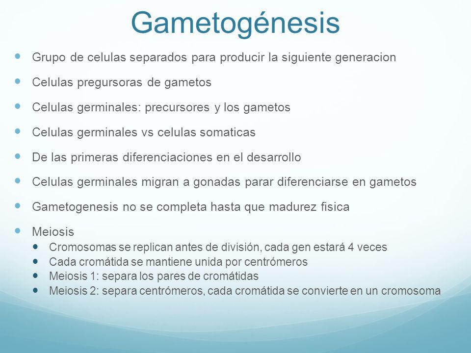Gametogénesis Grupo de celulas separados para producir la siguiente generacion. Celulas pregursoras de gametos.