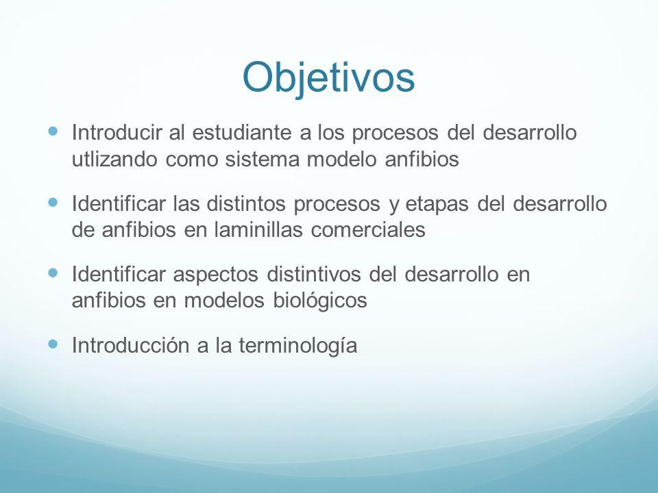 Objetivos Introducir al estudiante a los procesos del desarrollo utlizando como sistema modelo anfibios.
