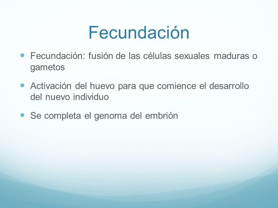 Fecundación Fecundación: fusión de las células sexuales maduras o gametos.