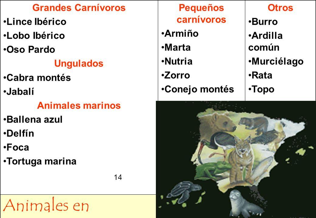 Animales en Extinción Grandes Carnívoros Lince Ibérico Lobo Ibérico