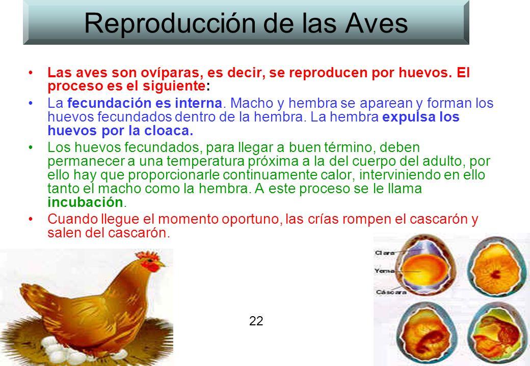 Reproducción de las Aves