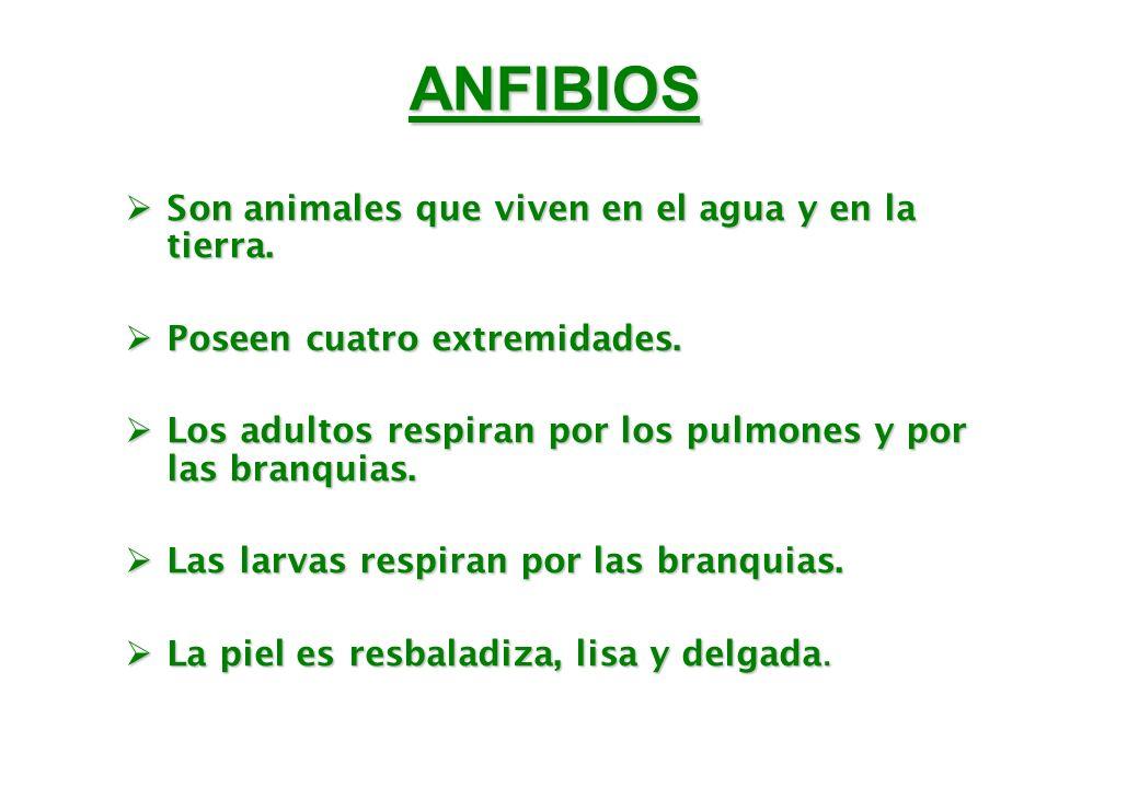 ANFIBIOS Son animales que viven en el agua y en la tierra.