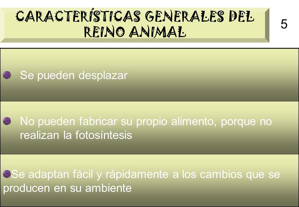 CARACTERÍSTICAS GENERALES DEL REINO ANIMAL