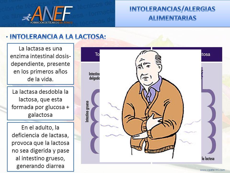INTOLERANCIAS/ALERGIAS ALIMENTARIAS