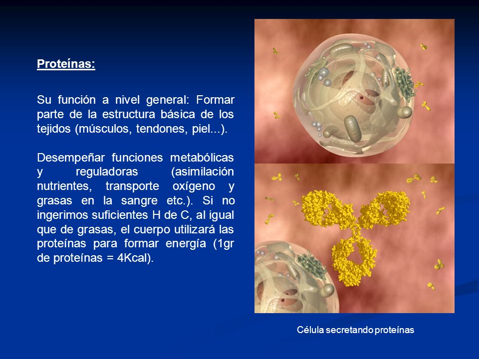 Proteínas: Su función a nivel general: Formar parte de la estructura básica de los tejidos (músculos, tendones, piel...).