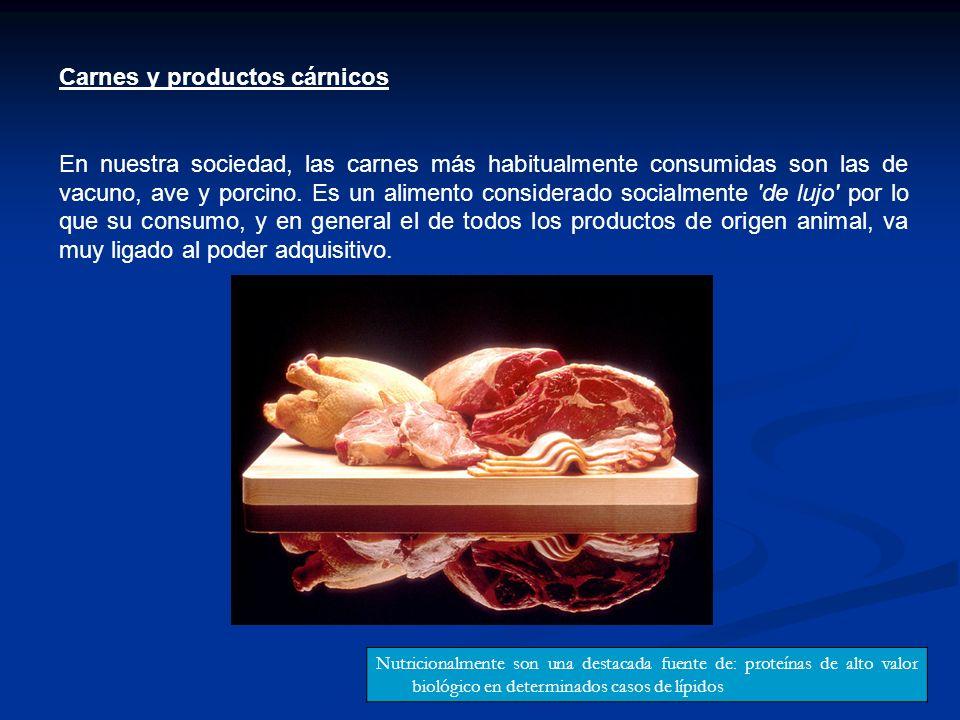 Carnes y productos cárnicos