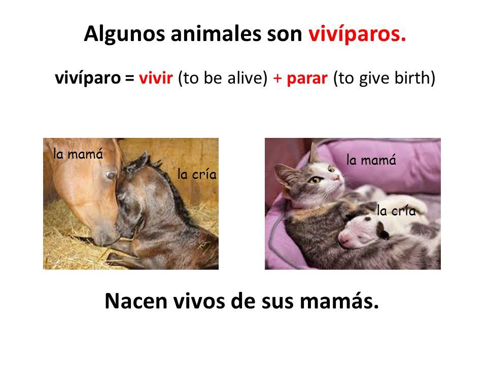 Nacen vivos de sus mamás.