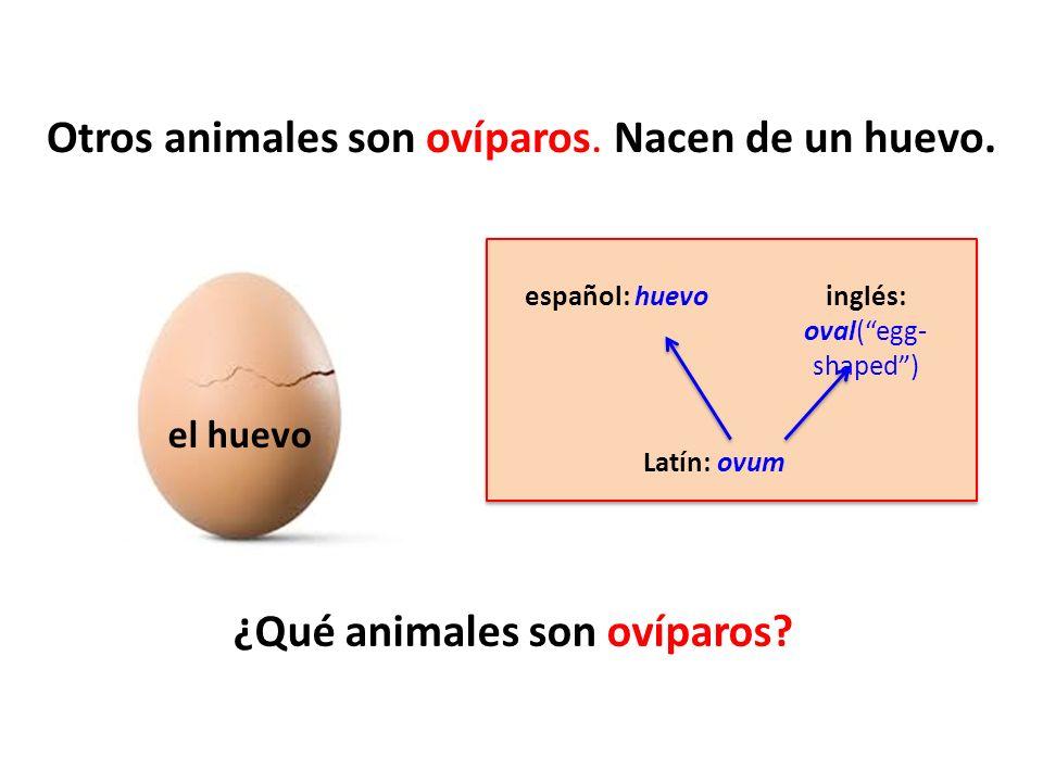 Otros animales son ovíparos. Nacen de un huevo.