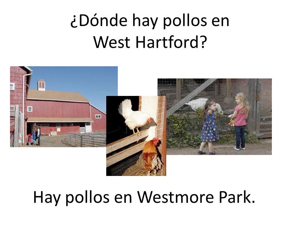 Hay pollos en Westmore Park.