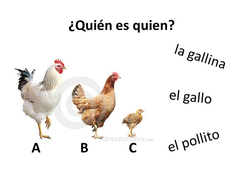 ¿Quién es quien la gallina el gallo el pollito A B C